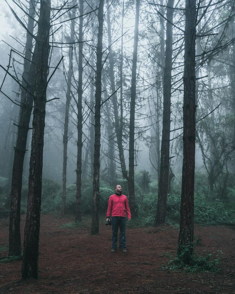 Retrato en bosque de niebla