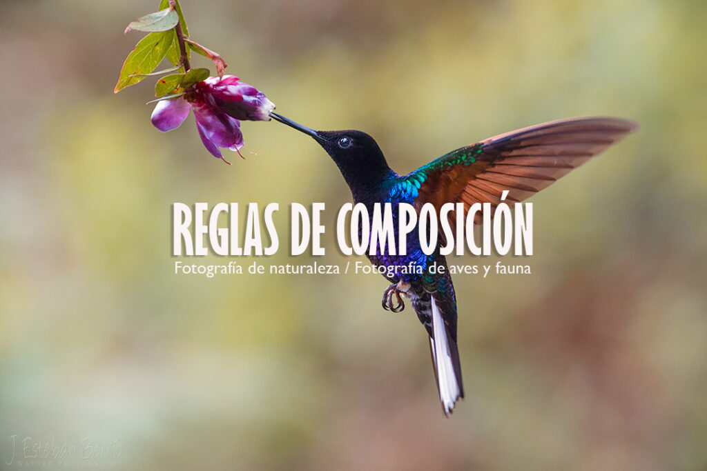 Entrada composición aves