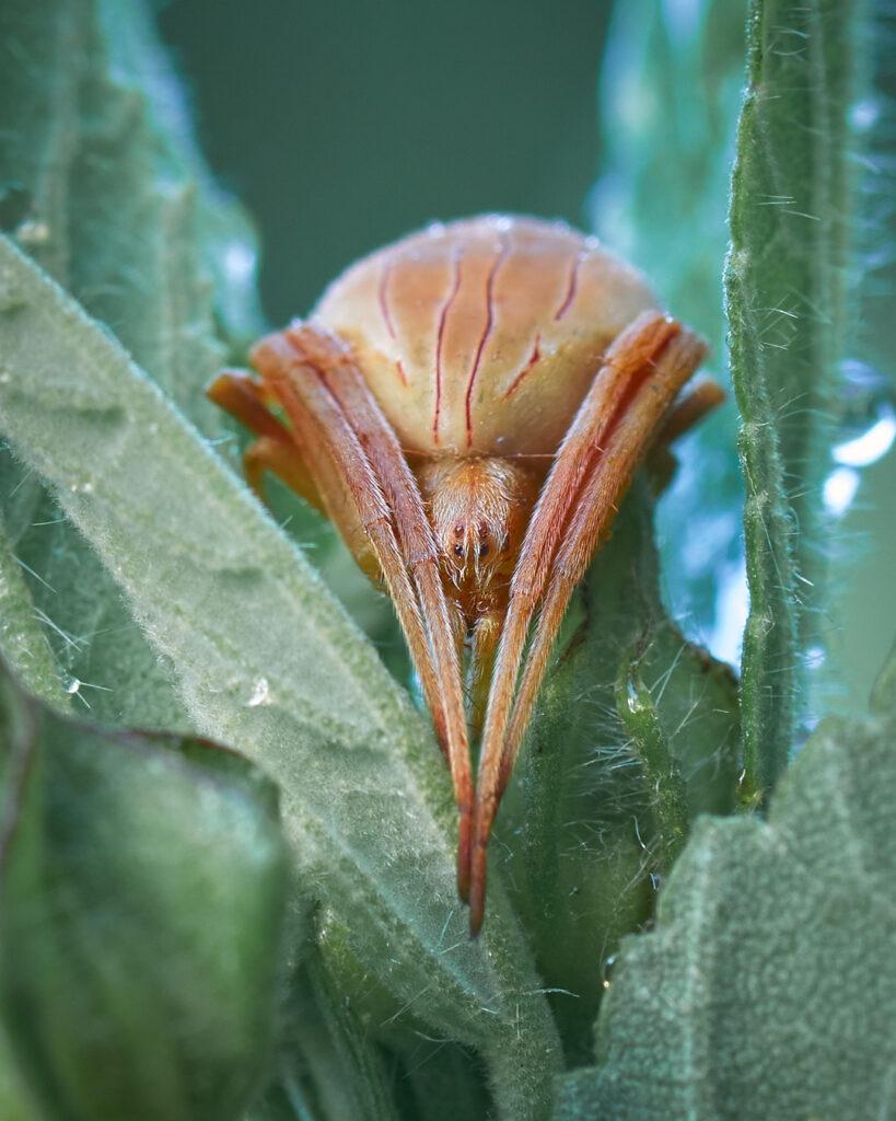 Araña entre hojas