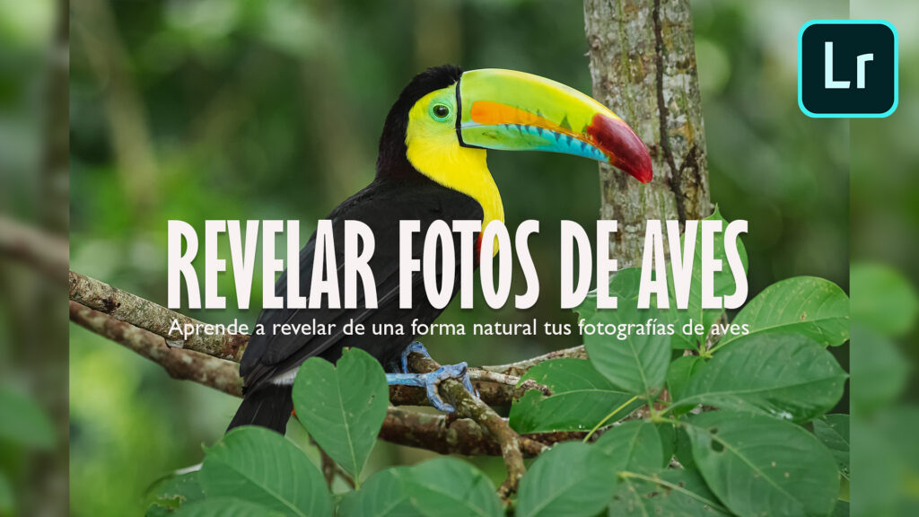 Revelado fotografía de aves