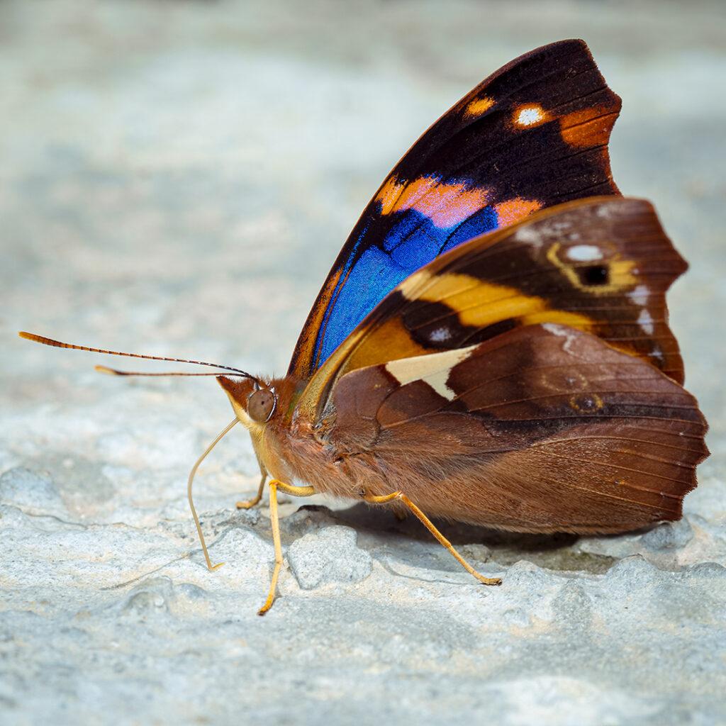 Colorida mariposa