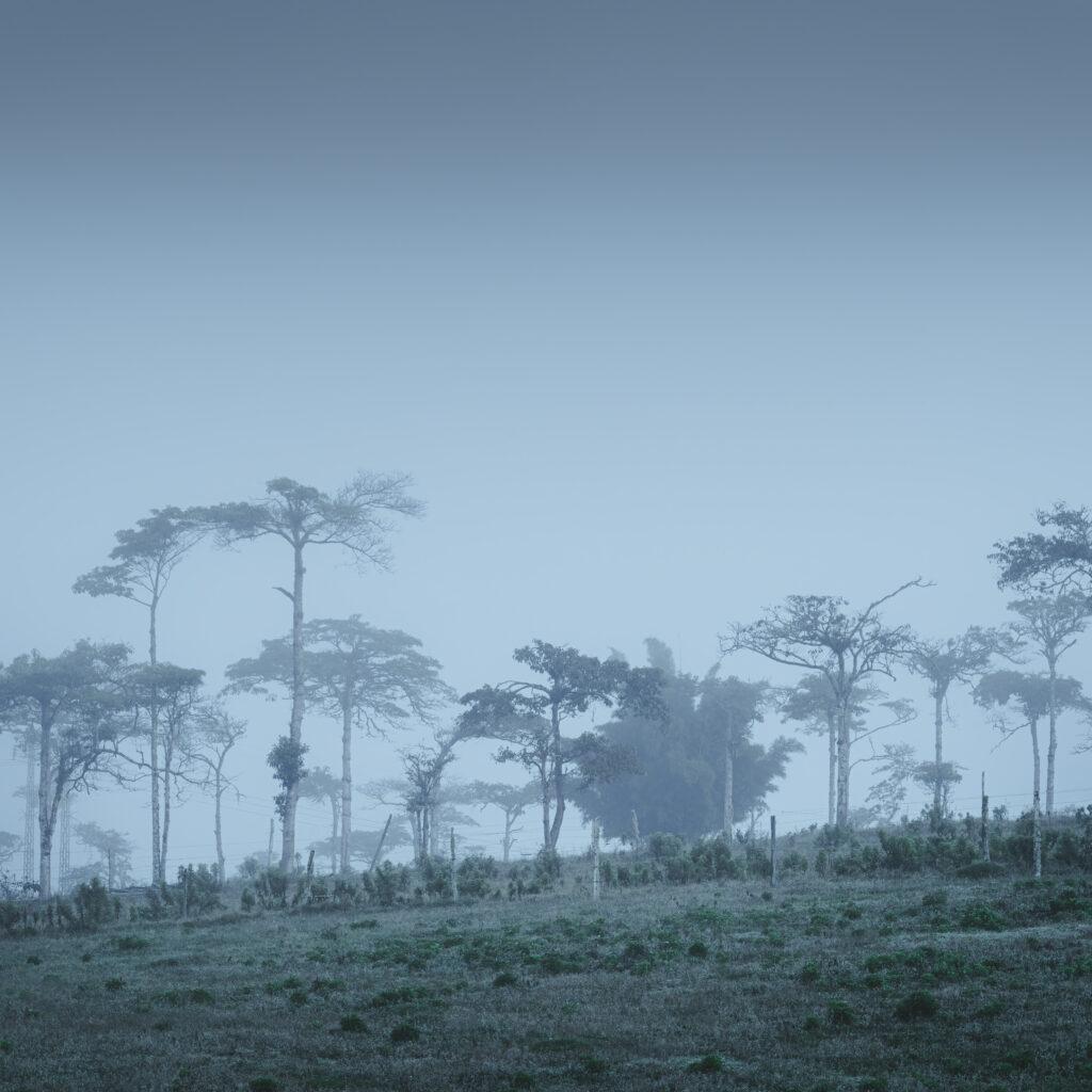 Bosque de nogales
