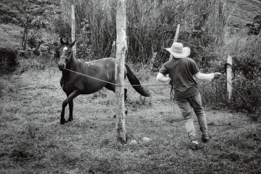 Adiestrador - Una vida de caballos